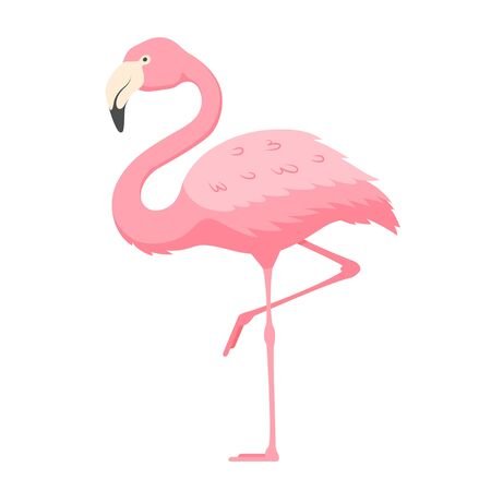 Pink flamingo, exotic tropical bird with bright plumage