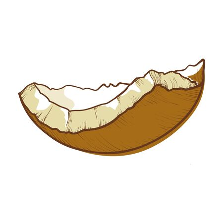 Coconut half shell icon, cracked brown coco nut Illustration