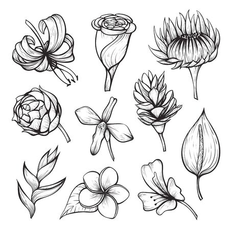 Set of tropical flowers hibiscus, orchid, plumeria, helicornia, strelitzia, calla, magnolia, frangipani. Paradise garden exotic plants. Hand drawn floral sketch vector isolated on white for print.