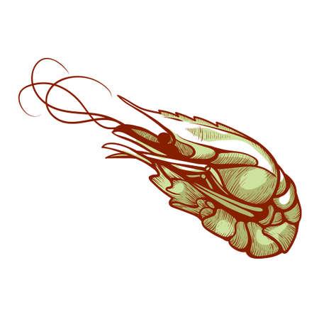 Shrimp, small crustacean marine food to cook