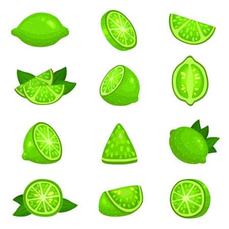 Lime whole, half, segments, slice, leaves set. Citrus fruits green round juicy.