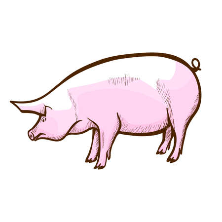 Pig hand drawn icon. Swine, piglet. Hog-raising farm, piggery. Pork production. Domestic animal. Illustration