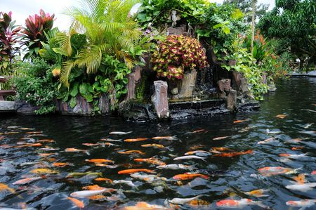 Koi Pond With Fishes