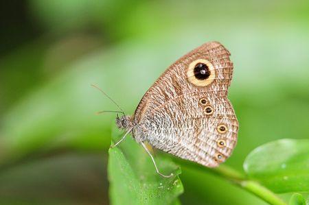 entomological: Butterfly Resting on A leaf