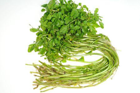 berros: Berros, fondo vegetal en blanco