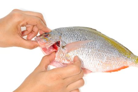 gill: Checking The Gill Of A Fish For Freshness