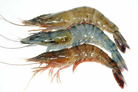 tiger shrimp: Fresh Prawns On White Background Stock Photo