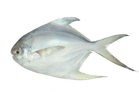 White Pomfret Fish On White background Stock Photo