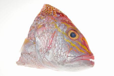 Red Snapper Fish Head On White background