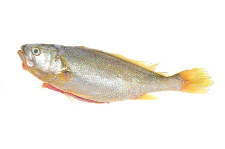 Yellow Croaker Fish On White background Archivio Fotografico