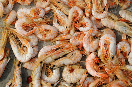 Drying Shrimps Under The Sun photo