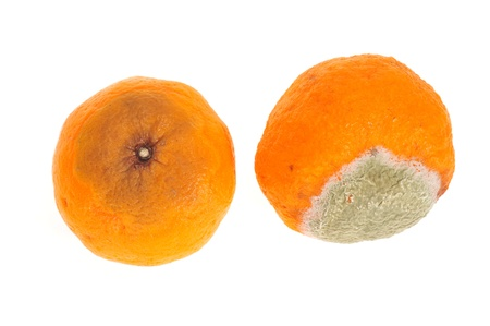 Rotten And Decomposed Oranges photo