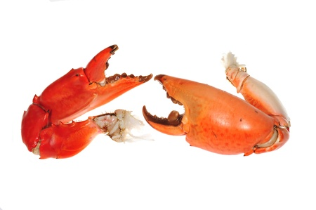 tenailles: Cooked Crab Pincers Isolated On White Background