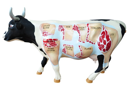 Dummy Cow Which Shows The Different Cuts