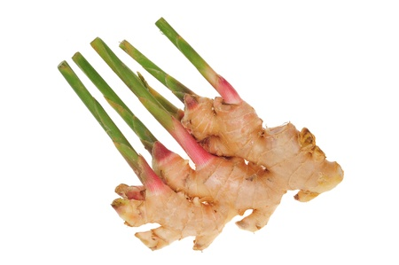 Young Ginger Root With Shoots