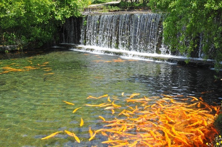 Landscape Garden With A Fish Pond And Mini Waterfall Stock Photo - 9856574