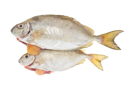 Fishes Laden With Roe Ready For Cooking Stock Photo - 10098600