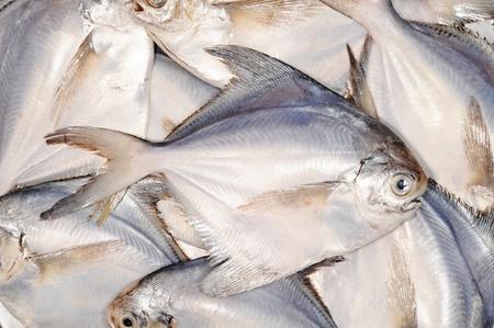 White Pomfret Fishes