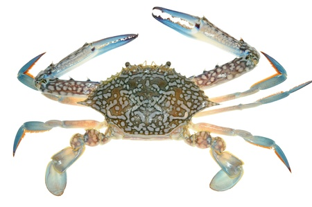 Flower Crab Isolated On White Background
