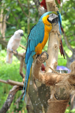 Colorful Macaw At A Bird Park photo