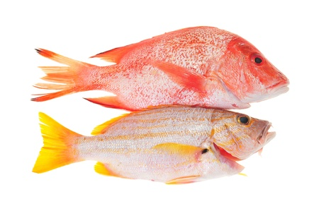 Red Snapper And Yellow Sea Bream  photo