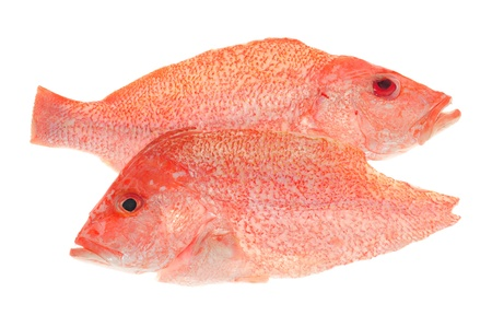 Sectional Cuts Of A Red Snapper Fish photo