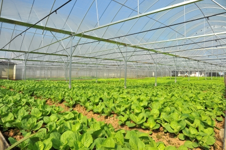 Vegetable Farm With Net To Keep Out Pests Stock Photo