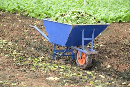 Wheel Barrow At A Vegetable Farm photo