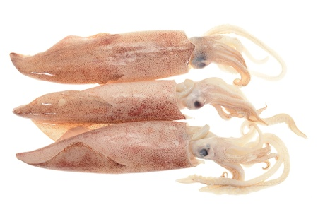 Fresh Squids Ready For Cooking
