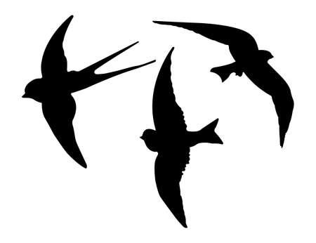 golondrinas: Siluetas de los pájaros. Vector EPS 10. Vectores