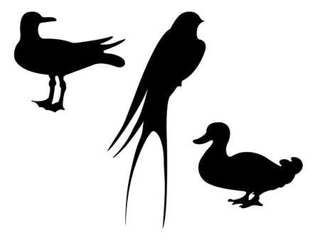 drake: Birds Silhouettes. Vector EPS 10. Illustration