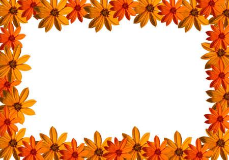 beautiful autumn flower photo frame photo