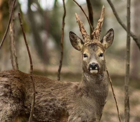 young deer in the forest photo