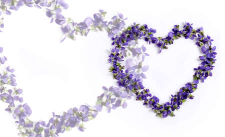 Valentine. Two hearts of violets on a white background