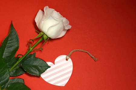 White rose and heart card on red background