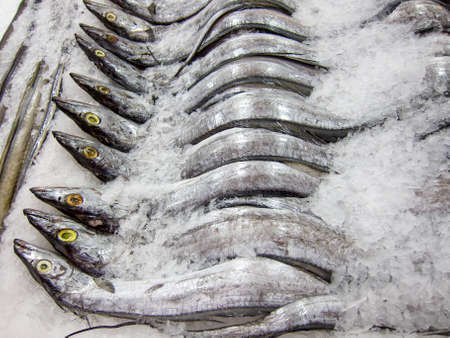 Fresh hairtail on the ice