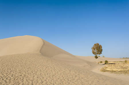 A lonely tree besides the sand dunes photo