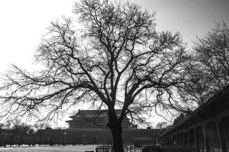 b and w: A tree in front of Tiananmen tower  B W