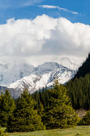 snowcapped: Snow-capped mountains and the pines Stock Photo