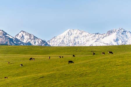 jokul: Grassland in Xinjiang, China Stock Photo