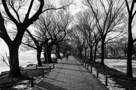 b and w: Scenery of a park in winter  B W