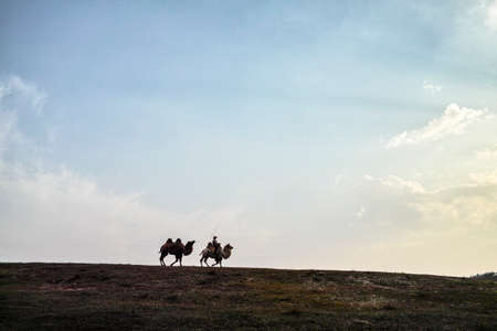 A herdsman and the camels walking at the grassland Stock Photo - 23429902