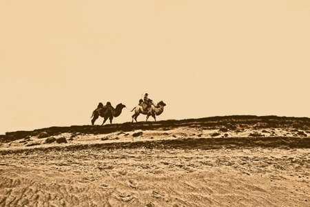 A herdsman and the camels walking at the grassland Stock Photo - 23429903
