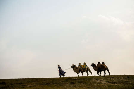A herdsman and the camels walking at the grassland Stock Photo - 24345288