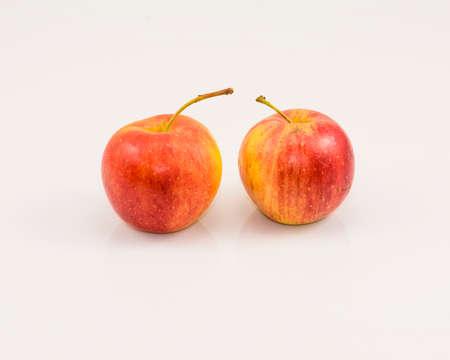 crabapple: Two Chinese pear-leaved crabapple on the white background Stock Photo