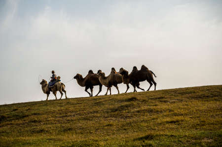 A herdsman and the camels walking at the grassland Stock Photo - 25100269