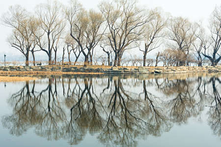bared: The bared trees at lakeside