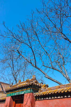 Bared trees in Forbidden City Stock Photo