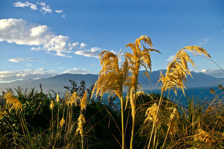 Dried grass on the mountains