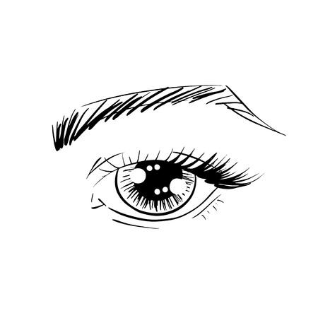 Yeux de contour de vecteur avec des sourcils, des cils et des ombres à paupières pour affiche, bannière, logo, icône. Modèle pour tester les couleurs de maquillage, tout concept d'entreprise, maquilleur, salon de beauté, étiquette cosmétique, visage